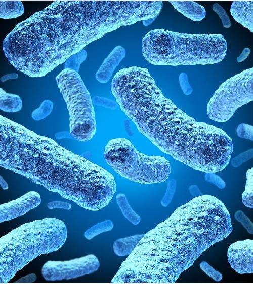 عـجـائب الميكروبت السبع